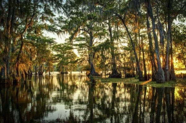 Importancia de los pantanos para el clima mundial