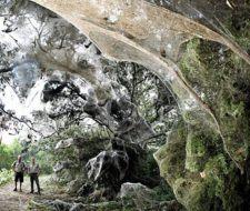 Tela de araña gigantesca semeja la guarida de Ella-laraña