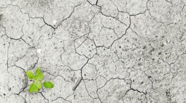 Identifican los productos que causan más daño al medioambiente