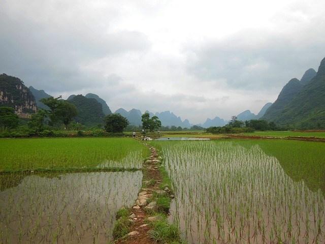 efecto-invernadero-asociado-a-los-arrozales