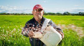 El arroz y el efecto invernadero