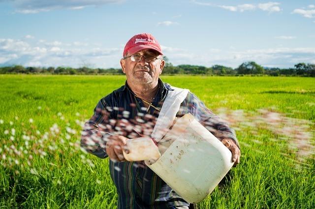 efecto-invernadero-como-afecta-el-cultivo-de-arroz-al-cambio-climatico