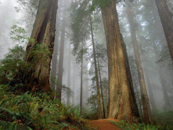 bosques-de-sequoias-o-secuoyas-en-el-mundo