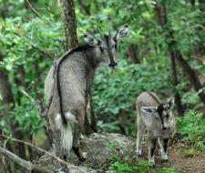 La Zona Desmilitarizada de Corea es un santuario ecológico
