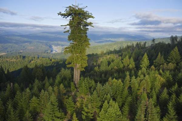 el-arbol-mas-alto-del-mundo-stratosphere-giant