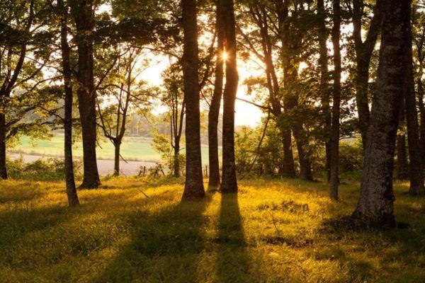 La Ley del Patrimonio Natural y de la Biodiversidad