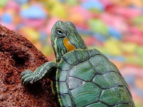 Los animales como indicadores de cambio climtico especies