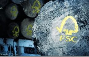 El 17 por ciento de la madera consumida en España, procede de tala ilegal