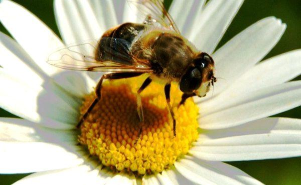 abejas-la-especie-ms-importante-del-mundo-proteccion