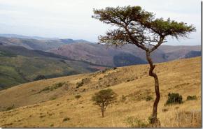 África funciona como aspiradora de CO2