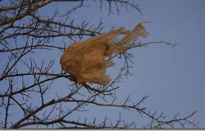 España da marcha atrás en prohibir las bolsas de plástico