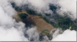¿Qué es la tala ilegal de bosques?