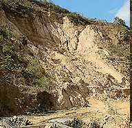 Tapetes vegetales que protegen al suelo de la erosión