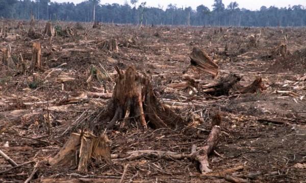 que-es-la-tala-ilegal-de-bosques