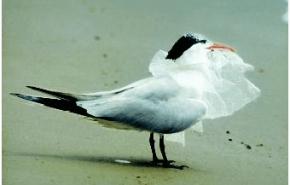 Aumenta el reciclaje de bolsas de plástico en Estados Unidos
