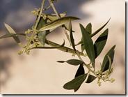 Día del Árbol, plantemos un árbol autóctono