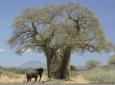 Tipos de árboles y sus características
