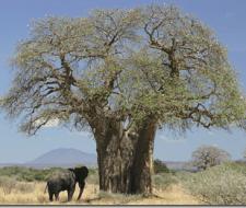 Tipos de árboles