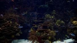 Los corales del mundo se extinguen. ¿Por qué?