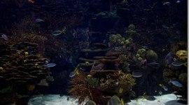 Oceanos y mares ácidos