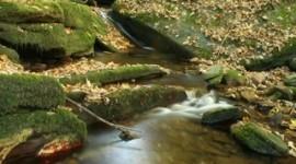 Cómo cuidar el medio ambiente: trucos sencillos para nuestro día a día