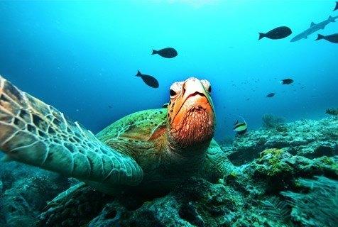 turtle_biodiversity_zoom