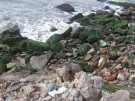 Contaminación de los mares