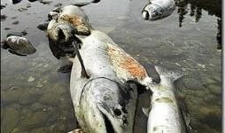 Contaminación de los ríos: por qué se produce y cómo evitarla