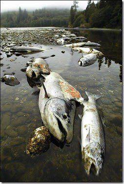 contaminacion-rios