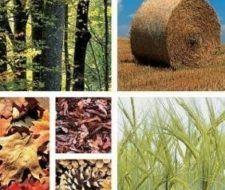 Energía de la Biomasa: una energía procedente de la naturaleza