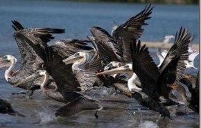 La OEM tendrá 6 millones de registro sobre anillamiento y seguimiento de aves