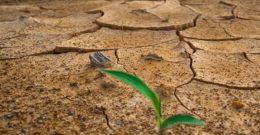 Las causas del cambio climático