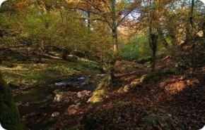 WWF publica un informe sobre el mapa forestal de nuestro país