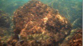 Golfo de Cádiz ¿Vale la pena proteger su ecosistema marino?