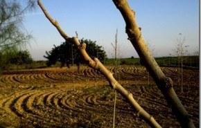 La pérdida de vegetación causa desertificación en España