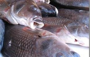 Desastre ecológico: muerte de peces intencional