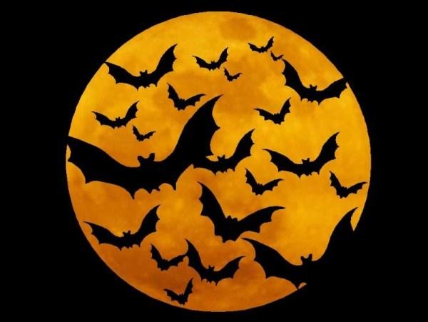 halloween-ecologico-2014-murcielagos
