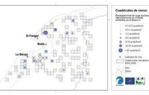 Identifican 42 áreas para la conservación de aves marinas