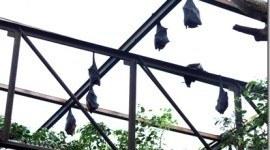 Medio Ambiente desea preservar a los murciélagos