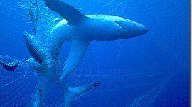 Italia condenada por el uso de redes de deriva ilegales
