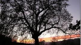 Ecologista afirma que Extremadura tiene el mejor paisaje de Europa