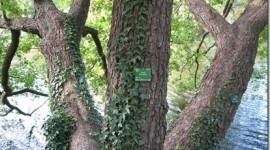 Reforestaciones cada vez más eficientes