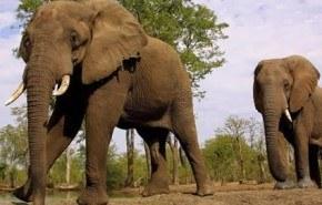 Vietnam construirá un hospital de elefantes