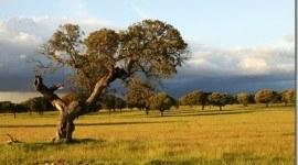 Extremadura contra la sequía