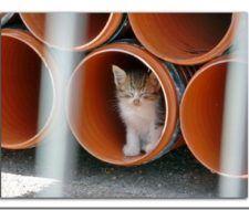 Medio Ambiente esterilizará gatos callejeros en Vigo