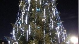 Arboles de Navidad ecológicos