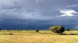 ¿Cuánto tardan las especies en adaptarse debido al cambio climático?
