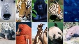 Diez especies que tendremos que cuidar en el año 2010