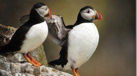 Aves del Mar del Norte vuelan hacia el Atlántico