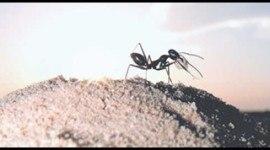 La importancia de las hormigas